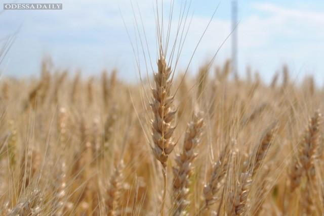 В Кабмине объяснили, сколько продлится в Украине мораторий на продажу земли