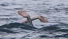 В море нашли тело 15- летнего подростка