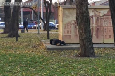 Труханов распорядился будить бездомных на газонах