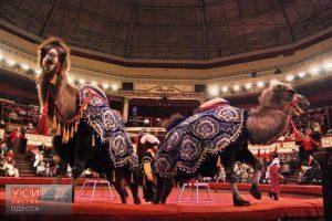 В одесском цирке могут запретить выступления животных в гастрольных труппах