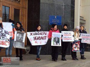 Одесские зоозащитники пикетировали ОГА с требованием ужесточить наказание за жестокое обращение с животными