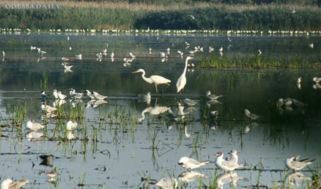 Беспредел в Нижнеднестровском   национальном природном парке, как зеркальное отражение  морального состояния  нашего общества