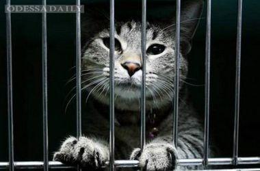В России судебный пристав арестовал кота за долги хозяина