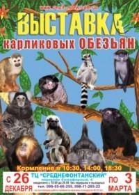 С 26 декабря в торговом центре «Среднефонтанский» - выставка карликовых обезьян. Фото