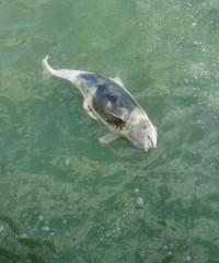 Дем'ян Ганул: Ось вам і Чорне море в Одесі. Мертвий дельфін