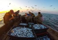Одесская область: Рыбаком быть лучше, чем браконьером