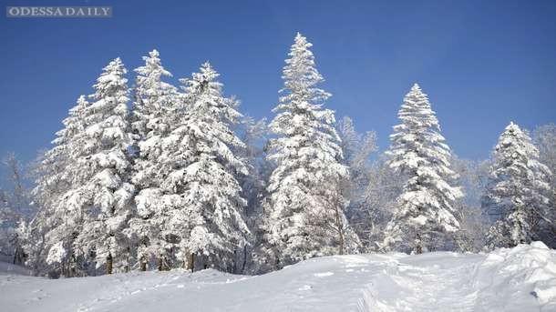 В Украине ударят ночные морозы