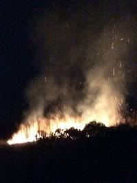 Одесская область: Виноградники Лакарена в селе Шабо – был ли поджог?