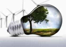 Французы будут выращивать энергетический тополь на Львовщине