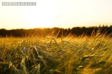 Китай запретил ячмень и кукурузу из Украины