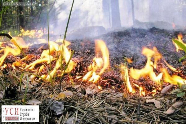 В Одесской области объявлен наивысший уровень пожарной опасности
