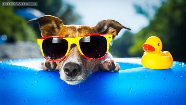 Украинцев ждут аномально жаркие выходные