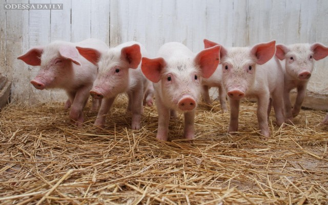 Свинина за месяц подорожала на 10%, — участники рынка