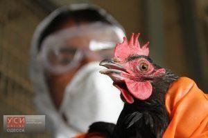 Евросоюз запретил ввоз одесской курятины из-за птичьего гриппа
