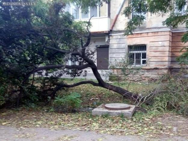 11 дней после урагана: в Одессе до сих пор не убрали все деревья