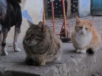 Приют для животных «Родственные души»